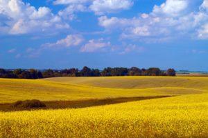 Agri land3